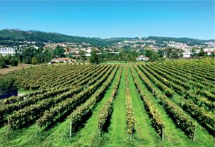 Винью-Верде (Vinho Verde)