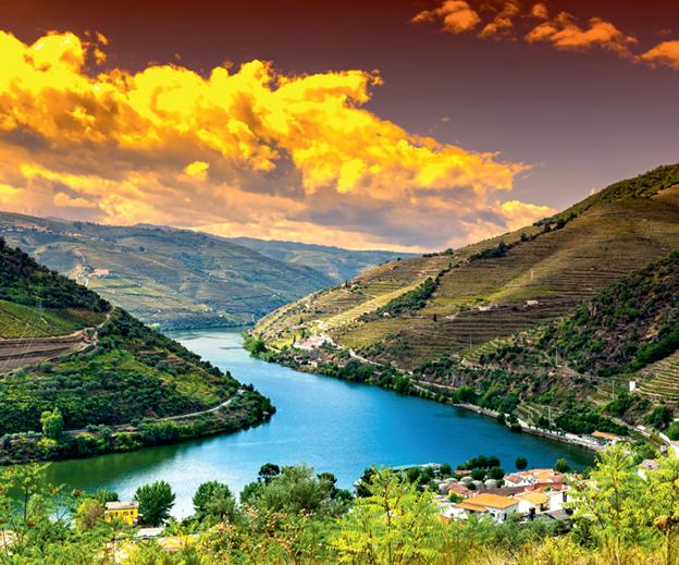 Виноделие Португалии — сорта, регионы, традиции