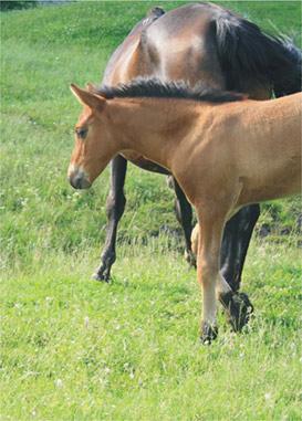 Кумыс — излюбленный кисломолочный напиток народов Средней Азии и Востока, приготовленный из лошадиного молока.