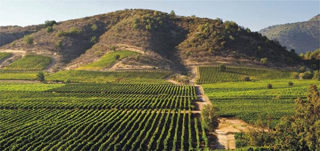 Аргентина. Традиции виноделия