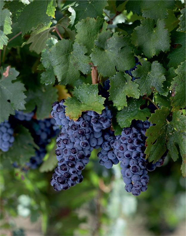 Бордо — самый известный и успешный винный регион мира.