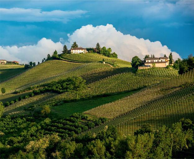 В Пьемонте достаточно лоскутных виноградников, разделенных на крошечные участки