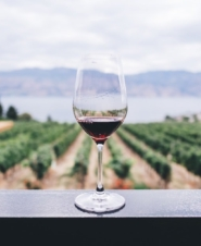 Сыр и красное вино спасут от старческого слабоумия